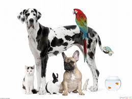 Pets Galore